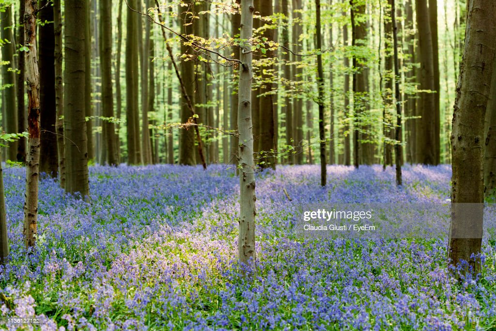 Panoramic View Of Flower Trees In Forest : Foto stock