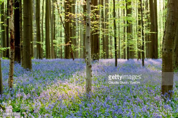 panoramic view of flower trees in forest - giusti claudia bildbanksfoton och bilder