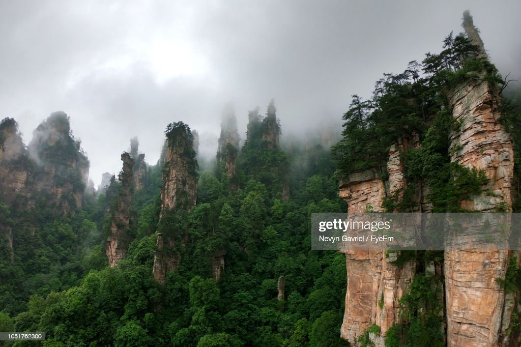 Panoramic View Of Forest Against Sky : Stock Photo