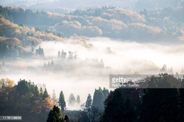 panoramic view of forest against sky - 新潟県 ストックフォトと画像