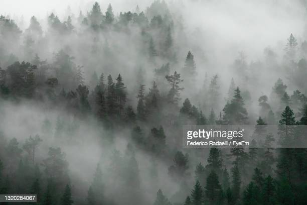 panoramic view of forest in the fog - バルドネキア ストックフォトと画像