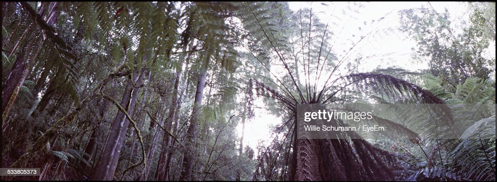 Panoramic View Of Forest : Foto stock