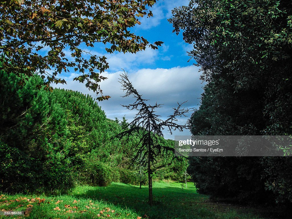Panoramic View Of Garden : Foto stock