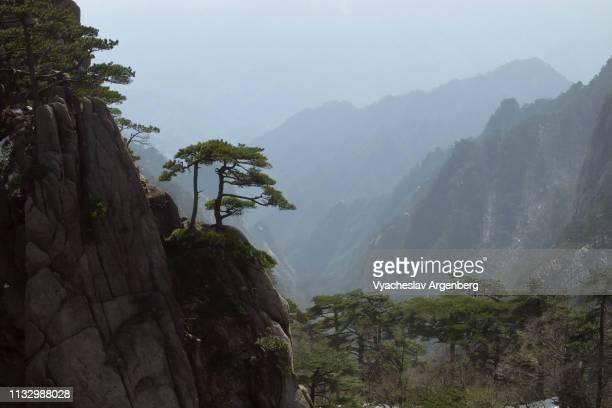 panoramic view of huangshan peaks and pines, china - argenberg - fotografias e filmes do acervo