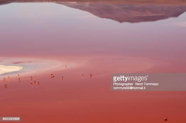 Panoramic view of Laguna Colorada with Flamingos in the Bolivian Altiplano , Bolivia