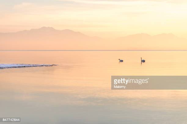 Panoramic view of Lake Chiemsee in winter with swans - Chiemsee, Bavaria, Germany