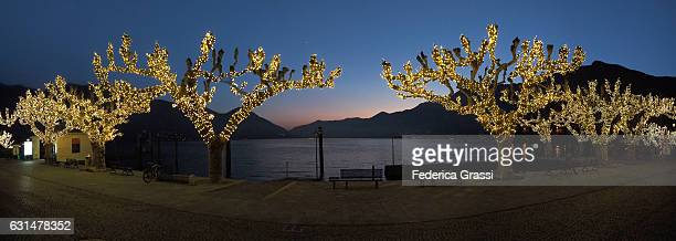 panoramic view of lake maggiore from ascona, with christmas trees in the foreground - mere noel stock pictures, royalty-free photos & images