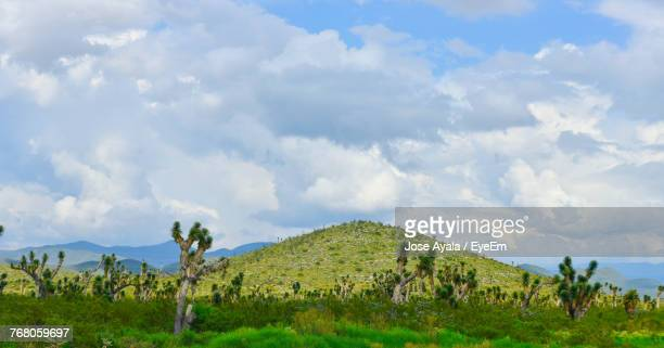 panoramic view of landscape against sky - jose ayala stock pictures, royalty-free photos & images