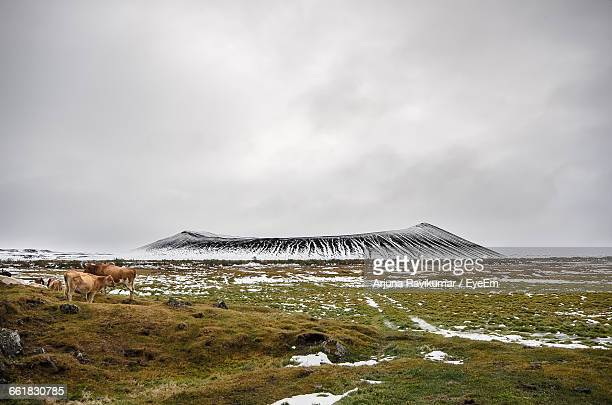 Panoramic View Of Landscape With Hverfjall Crater In Background In Northern Iceland