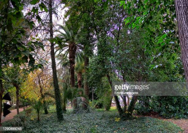 panoramic view of lush foliage in a public park ,izmir. - emreturanphoto stock pictures, royalty-free photos & images
