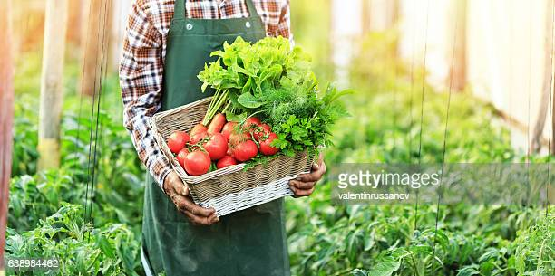 Panoramic view of male hands holding a basket with vegetables