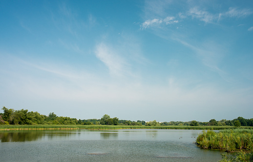Panoramic view of Marsh land by Lake Ontario , Canada 1031398252