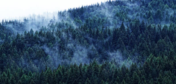 Panoramic view of pine trees in forest against sky,Maranza,Bolzano,Italy
