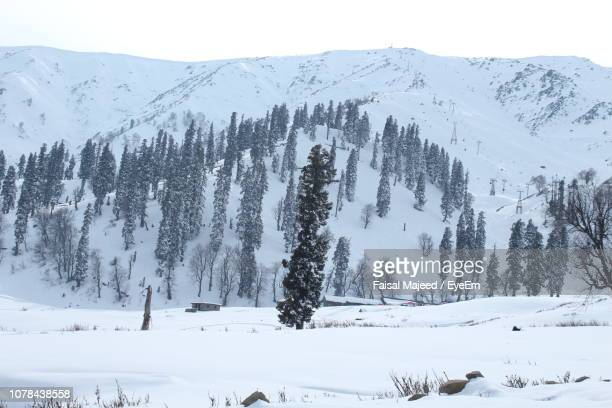 Panoramic View Of Pine Trees On Snow Covered Landscape