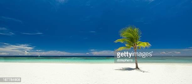 Panoramic view of single palm tree on tropical beach