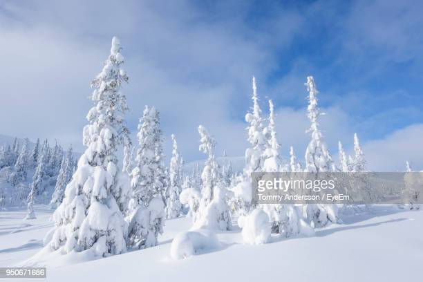 panoramic view of snow covered landscape against sky - coberto de neve - fotografias e filmes do acervo