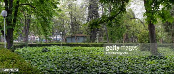 panoramic view of the gardens of kulturpark in izmir. - emreturanphoto stock pictures, royalty-free photos & images