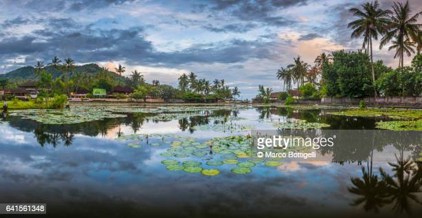 panoramic view of the lotus lagoon. candidasa, bali. - lagoon stock pictures, royalty-free photos & images