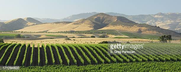 Panoramic view of the Santa Barbara Vineyard
