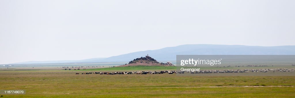 Panoramic view of the steppes of Mongolia : Stock Photo