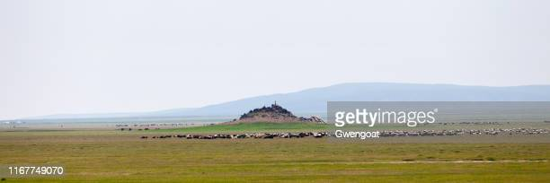 panoramic view of the steppes of mongolia - gwengoat stock pictures, royalty-free photos & images