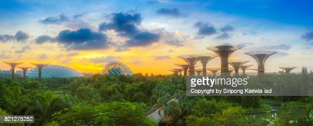 Panoramic view of the Super Trees Groove and Cloud Forest Dome inside the Gardens by the Bay during sunrise.