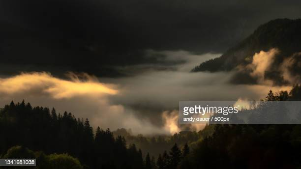 panoramic view of trees against sky during sunset - andy dauer stock pictures, royalty-free photos & images