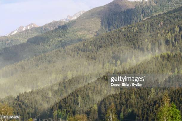 panoramic view of trees and mountains - impollinazione foto e immagini stock