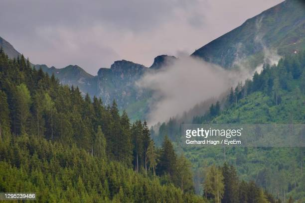 panoramic view of trees and mountains with rising fog against sky - gerhard hagn stock-fotos und bilder