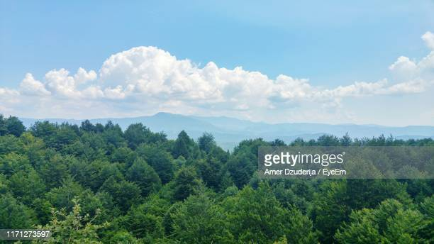 panoramic view of trees and plants against sky - treetop stock pictures, royalty-free photos & images