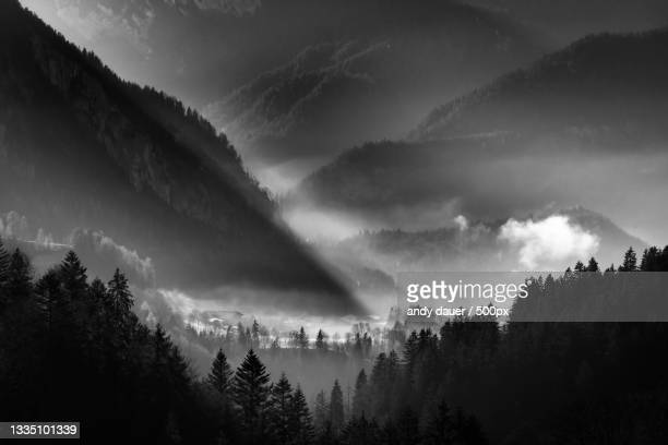 panoramic view of trees in forest against sky - andy dauer stock pictures, royalty-free photos & images