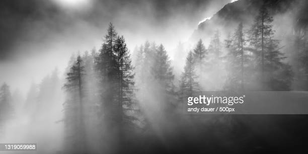 panoramic view of trees in forest against sky,gemeinde ramsau am dachstein,austria - andy dauer stock pictures, royalty-free photos & images