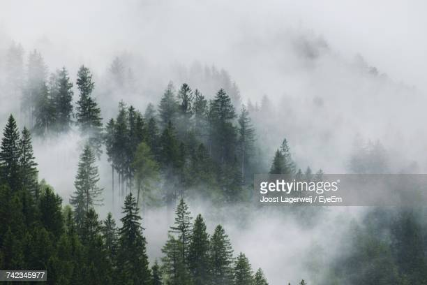 panoramic view of trees in forest during foggy weather - nebel stock-fotos und bilder