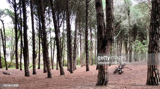 panoramic view of trees in forest - lanzini fotografías e imágenes de stock