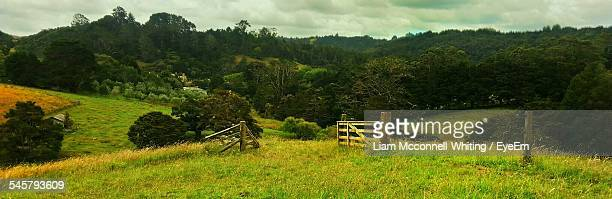panoramic view of trees on grassy field against cloudy sky - mcconnell stock pictures, royalty-free photos & images
