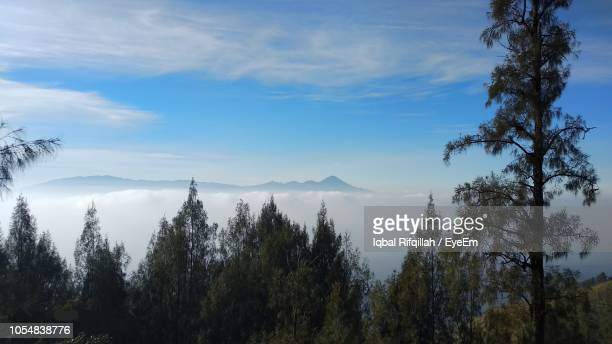 panoramic view of trees on landscape against sky - east java province stock pictures, royalty-free photos & images