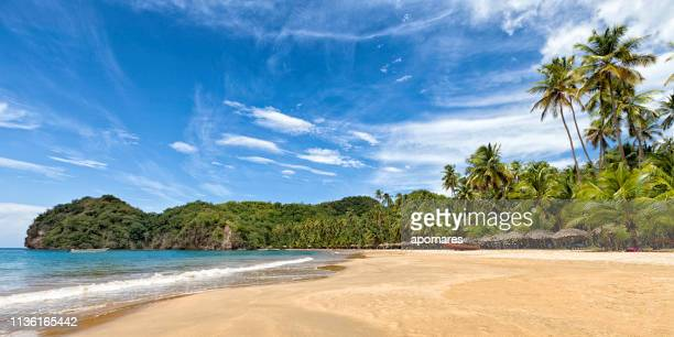 panoramic view of tropical caribbean beach with coconut trees. - tropical tree stock pictures, royalty-free photos & images