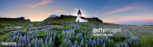 Panoramic view of Vik I Myrdal Church with Lupins as a foreground in summer.