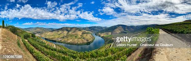panoramic view of vineyards in the douro valley in portugal - 360 fotografías e imágenes de stock