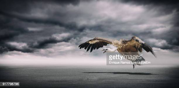 Panoramic View Of Vulture Flying Against Stormy Clouds Over Sea