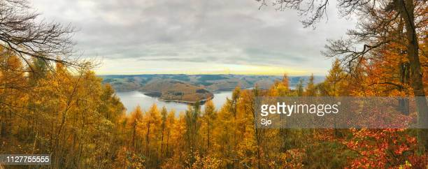 panoramic view over the rursee from the forest with autumn colors in the eifel in germany - north rhine westphalia stock pictures, royalty-free photos & images