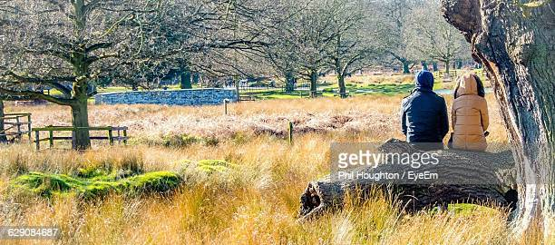 panoramic view people sitting on tree trunk at bradgate park - leicester stock pictures, royalty-free photos & images