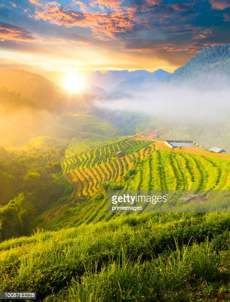 panoramic view sunrise and mist on mountain view at the north of thailand - north stock pictures, royalty-free photos & images