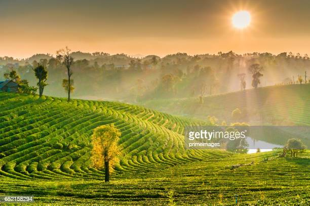 panoramic view sunrise and mist on mountain view at the north of thailand - provincia di chiang mai foto e immagini stock