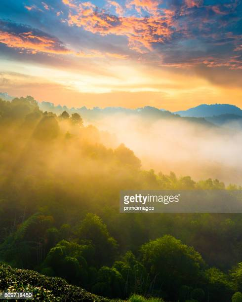 panoramic view sunrise and mist on mountain view at the north of thailand - sunrise mountain peak stock pictures, royalty-free photos & images
