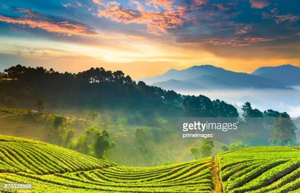 panoramisch uitzicht op sunrise en mist op uitzicht op de bergen in het noorden van thailand - zuidoost azië stockfoto's en -beelden
