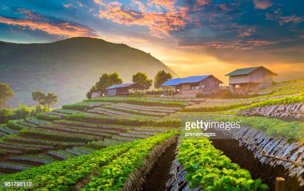 panoramic view sunrise and mist on mountain view at the north of thailand - chiang mai province stock photos and pictures