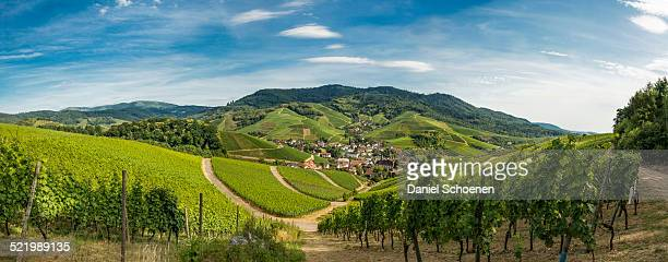 Panoramic view, vineyards, near Durbach, Ortenau, Black Forest, Baden-Wurttemberg, Germany