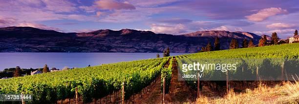 panoramic vineyards kelowna - kelowna stock pictures, royalty-free photos & images