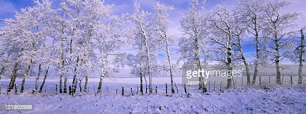 Panoramic Winter Scenic
